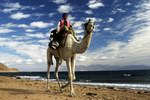 Большой верблюжий поход по Синаю
