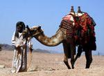 Этнографическое путешествие по Синаю «Тропами Бедуинов»