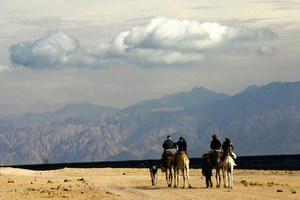 На верблюдах по берегу Красного моря
