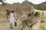 Бедуинская короткометражка